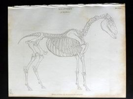 Rees 1820 Antique Print. Anatomy of the Horse after George Stubbs 01